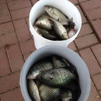 Photo of fishing for White Bass in Richland-Chambers Reservoir, TX