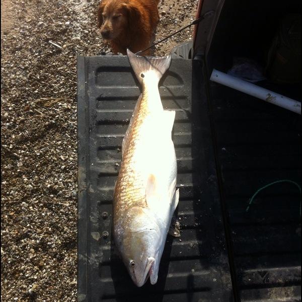 San luis pass fishing reports inshore fishing texas for San luis pass fishing