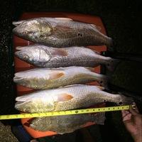 San Luis Pass Fishing Report 09/03/2017