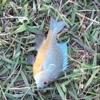 Burleson Ponds Fishing Report 09/15/2015