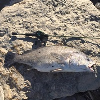 Saltgrass Spillway (near Costco and Bryant Irvin Rd) Fishing Report 03/29/2016