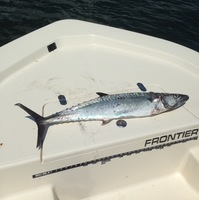 Offshore Fishing Report 09/13/2016