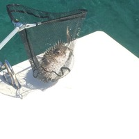 Other Saltwater Fishing Report 11/15/2014