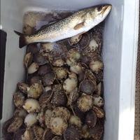 Apalachicola bay fishing reports fishingscout mobile app for Apalachicola fishing report