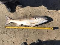 San Luis Pass Fishing Report 03/20/2017