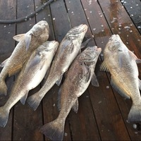 Oso Bay Fishing Report 02/23/2016