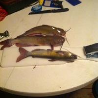 Lake Bob Sandlin Fishing Report 06/19/2013