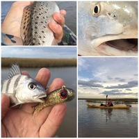 Other Saltwater Fishing Report 10/24/2016