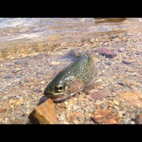 Big Bear Lake Fishing Reports Fishingscout Mobile App