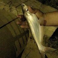 Rio Grande (Near Laredo TX) Fishing Report 08/07/2017
