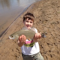 Fishingscout mobile app mississippi fishing reports for Sardis lake fishing report