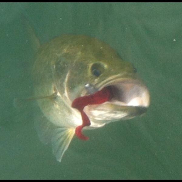 Lake Dunlap Fishing Report 09/18/2013