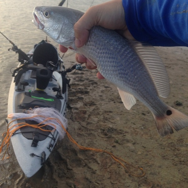 Red redfish drum clear creek tx fishingscout for Clear creek fishing report