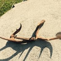Gaston County Hunting Report 09/10/2017