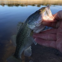 Lake Georgetown Fishing Report 10/18/2015