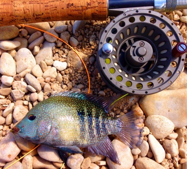 Cibolo Creek Fishing Report 07/17/2015