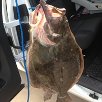 Lake Nassau Fishing Report 07/31/2014