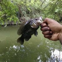 San Antonio Ponds Fishing Report 07/03/2017