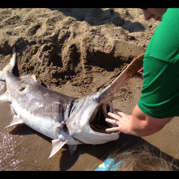Lewis and Clark Lake Fishing Report 08/25/2013