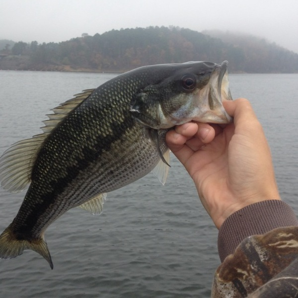 broken bow lake fishing reports fishingscout mobile app