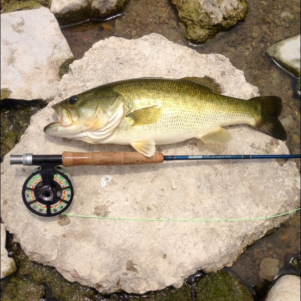 Guadalupe River Fishing Report 07/31/2014