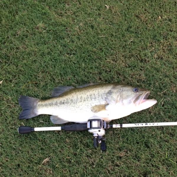George Bush Park Ponds Fishing Report 09/23/2014