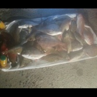 Other Saltwater Fishing Report 02/22/2014