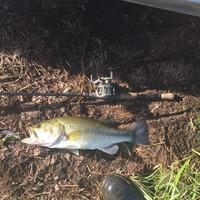 Camp Creek Lake Fishing Report 06/16/2015