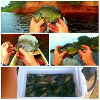 Lake Trammel Fishing Report 06/28/2016