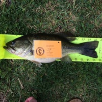 Seabrook Ponds Fishing Report 03/12/2016