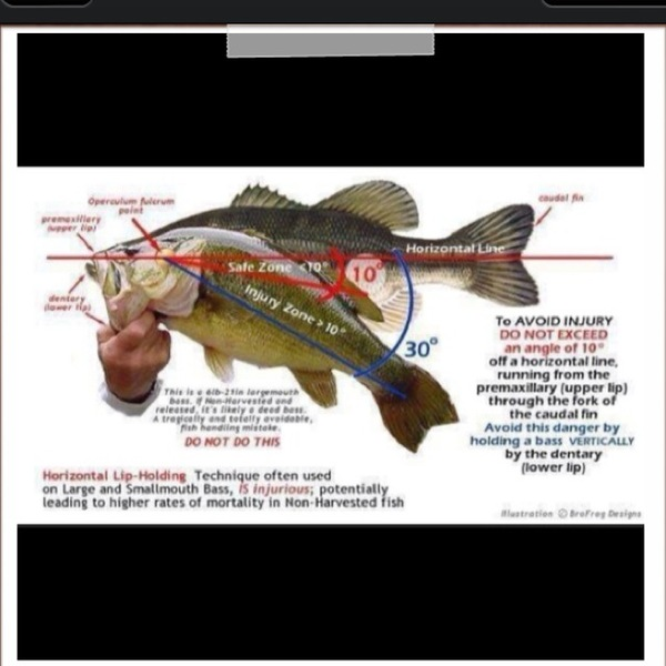 Lubbock Ponds Fishing Report 06/23/2013