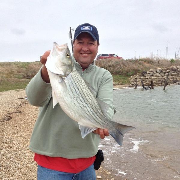 Hybrid bass lake waco tx fishingscout for Lake waco fishing report