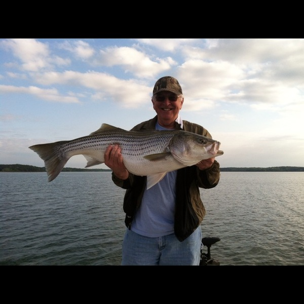 lake hartwell fishing reports fishingscout mobile app