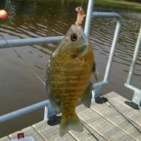 Graham Park Pond Fishing Report 06/22/2015