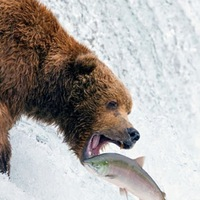 Lake Alan Henry Fishing Report 06/26/2013