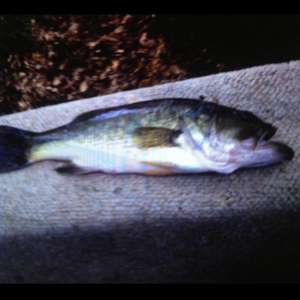 Bite alert damariscotta lake me fishingscout for Fishing report near me
