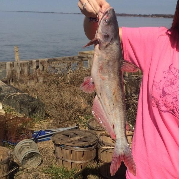 Rappahannock river saltwater fishing report for Sc saltwater fishing report