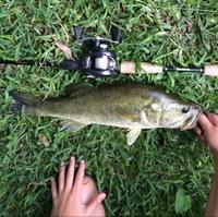 Lake Austin (Austin) Fishing Report 07/15/2016