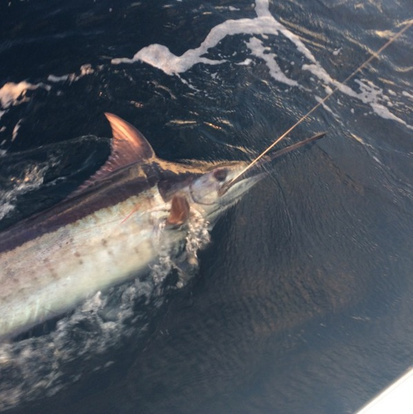 Other Saltwater Fishing Report 12/08/2014