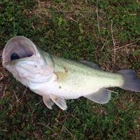 Live Oak Pond Fishing Report 03/15/2015