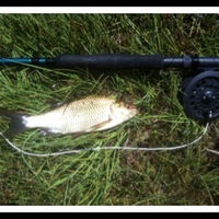 Other Freshwater Fishing Report 07/15/2013