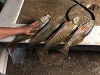 Calaveras Lake Fishing Report 08/19/2017