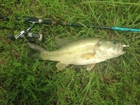 Alvin Ponds Fishing Report 05/27/2016