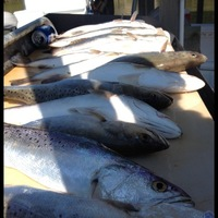 San Antonio Bay Fishing Report 10/25/2014