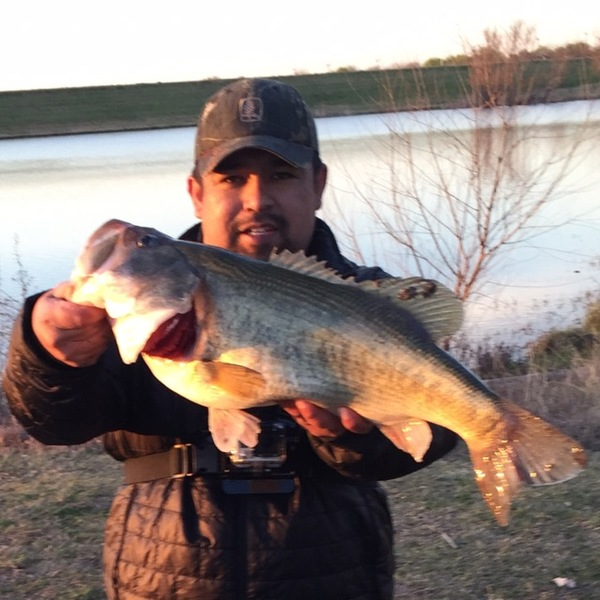 Largemouth bass san antonio ponds tx fishingscout for Tpwd fishing reports