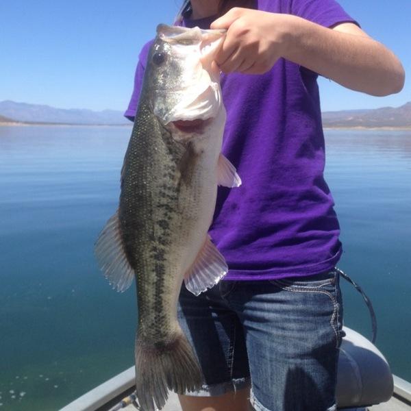 Theodore roosevelt lake fishing reports fishingscout for Bass fishing az