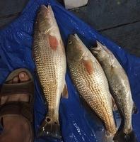 Clear Lake Fishing Report 01/16/2017