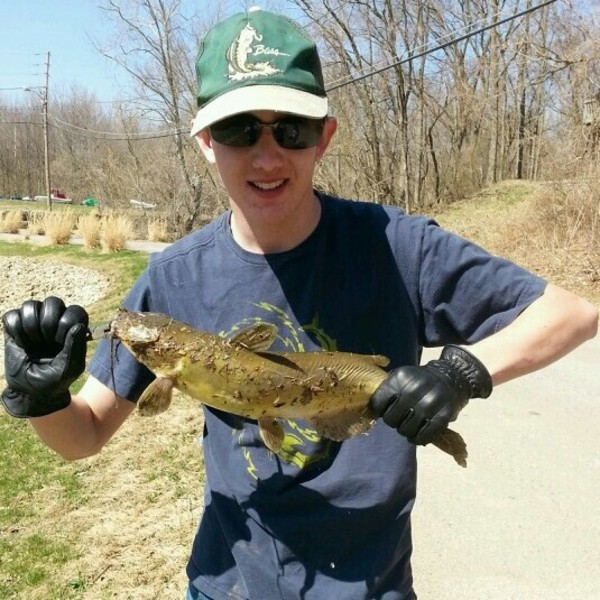 Other catfish ohio river il ky fishingscout for Ohio fishing report