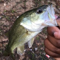 LNVA Canal and Ponds Fishing Report 08/17/2016