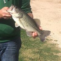 Cuero Ponds Fishing Report 04/13/2016